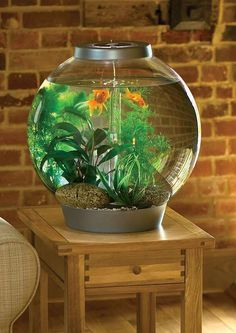 Free of tubes and wires, the BiOrb 8-gallon Aquarium serves as a mesmerizingly beautiful home for your fish friends while serving as a focal point in any room.