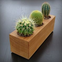 Modern Trends: Cactus Garden Ideas & Tips!