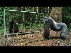野生の動物に「鏡を見せてみた」ら、我思ったり/思わなかったり、故に我あり:DDN JAPAN