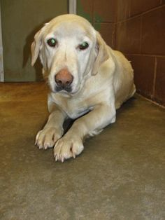 SWEET LADY LAB HAS FOSTER OFFER, BUT NEEDS A PAW PULL. WON'T YOU HELP THIS COLBERT COUNTY ALABAMA KILL SHELTER WHOSE FULL UP & WILL KILL TO MAKE ROOM? Address: 5010 Missouri St Tuscumbia,…