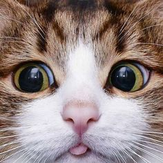 The many expressions of cat - Album on Imgur
