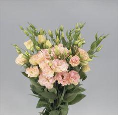 peach/pink lisi's (bloom brokers)