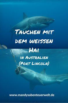 Ein ganz besonderes Erlebnis: Tauchen mit weißen Haien. Das geht in Australien! Finde hier meinen Erfahrungsbericht. Lohnt es sich? #australien #südaustralien #hai #schwimmen #mithaischwimmen