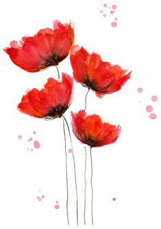 Poppy Cluster Red Watercolor Print