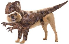 LOL - Yorki would be a real TERROR in this!  Animal Planet PET20109 Raptor Dog Costume, Small