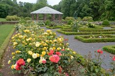 Deep Cut Gardens in Middletown, NJ consists of 54 acres of greenhouses and gardens devoted to the home gardener and opened to the public since 1978.