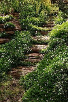 garden-path-089.jpg