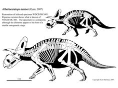 Albertaceratops nesmoi