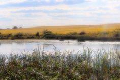 Picturesque Pond #motherofnecessity