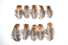 Natural Cock Pheasant Brown/ Orange Tipped Craft Feathers