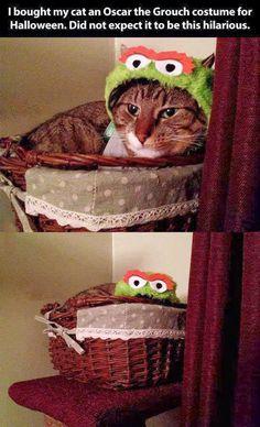 Kitttyy!