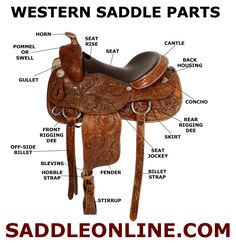 Western saddles have a number of different parts that make the saddle both functional and effective. It is important for riders to know the parts of the saddle in order to determine the correct saddle size they need and learn how to tell the different types of western saddles apart.