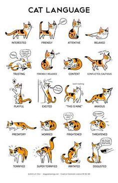 Cute Cats, Funny Cats, Funny Animals, Cute Animals, Adorable Kittens, Funny Horses, Cute Cat Names, Cats Humor, 9gag Funny