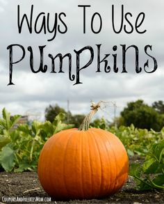 6 Ways to Use Pumpkins: Reuse Your Pumpkins! Save money and learn how to reuse your pumpkins after Halloween or Thanksgiving is over! You'll stretch your budget with these simple and fun ideas! Check them out now!
