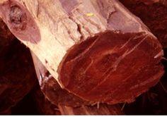 bois de santal rouge