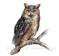 Watercolour Long-eared Owl by Happy Apple Bumblebee