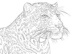 portrait of indian leopard coloring pages colouring adult detailed advanced printable kleuren voor volwassenen coloriage pour