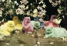 dyed cats tim walker