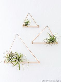Build this lovely little air plant hanger | DunnDIY.com | #inspiration