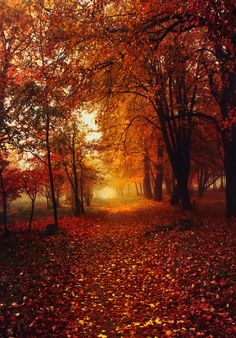 golden autumn by Slava Samoilenko on 500px
