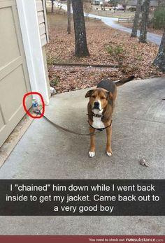 lol that's a good dog