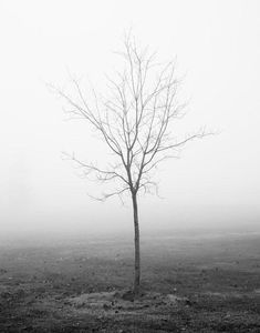 Fledgling, Foggy Landscape Photography - Black and white photograph of a small bare tree in a foggy field. Best Landscape Photography, Nature Photography Tips, Monochrome Photography, Black And White Photography, Digital Photography, Black And White Tree, Black And White Landscape, Bare Tree, Winter Trees