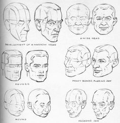 Andrew Loomis - Drawing The Head & Hands 3 Man Anatomy, Anatomy Poses, Anatomy Drawing, Human Poses Reference, Figure Drawing Reference, Face Reference, Neck Drawing, Human Drawing, Drawing Lessons