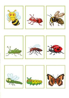►Interactive theme image ►Interactive kindergarten songs ►Language activities ►Math activities ►Educational games IWB or tablet ►Writing activities ►Crafts Bug and insect names with pictures Language Activities, Writing Activities, Preschool Worksheets, Preschool Activities, Learn Dutch, Kindergarten Songs, Dutch Language, Bugs And Insects, Animal Projects