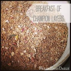 New & Improved Breakfast of Champions (updated recipe for use with 50# bag of feed). Can't wait to get my girls on this!