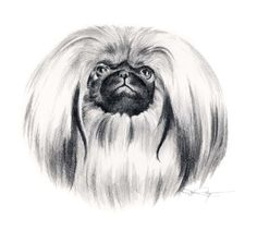 PEKINGESE Dog Pencil Drawing ART Print Signed by by k9artgallery, $12.50