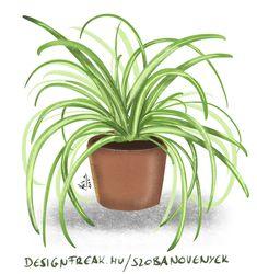 House Plants, Gardens, Vases, Flowers, Indoor House Plants, Outdoor Gardens, Foliage Plants, Houseplants, Apartment Plants