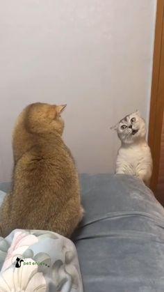 Funny Animal Jokes, Funny Cute Cats, Cute Baby Cats, Cute Little Animals, Funny Cat Videos, Cute Funny Animals, Funny Animal Pictures, Animal Memes, Kittens Cutest