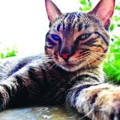 6 pics Funny cat Selfie