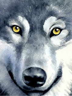 Wolf Art Print Wildlife Art Print By Artist Dj Rogers - Affordable Prices Wildlife Art Prints Landscape Art Prints Hand Signed Shop The Dozens Of Limited Edition Art Prints By Award Winning Artist Chuck Black Wold Wall Art Wildlife Art N Animal Paintings, Animal Drawings, Art Drawings, Horse Drawings, Drawing Art, Watercolor Animals, Watercolor Paintings, Watercolor Wolf, Watercolor Paper