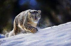 красивые фото животных - Поиск в Google