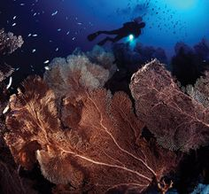 A diver explores the brilliantly hued underwater world of the Seychelles.