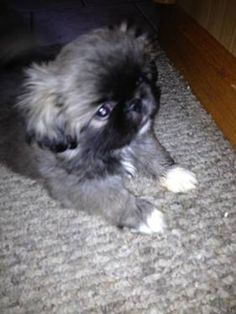I need one! My pup Zeke needs a friend but are they good with other dogs?