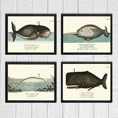 Whale Art Print Set of 4 Antique Beautiful Ocean Sea Marine Nature Colored Natural Science Chart Illustration Home Wall Decor Unframed GNT. Beautiful set of 4 prints based on antique illustrations from 1746. Wonderful details, colors and natural history feel. • The prints measure 4x6, 5x7, 8x10, or 11x14 inch. based on your selection and come with a white border for easy framing. • Printed on professional artist archival matte paper. • The prints are part of Amazon Handmade program and…