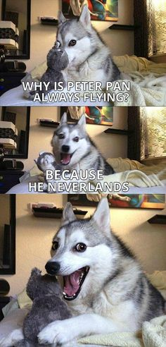 Pun Dog Never Grows Old