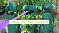 When planting up your own Al's Flower Pouch, be sure to water it correctly. It's easy and important! Here's how. #torontolovesplants #alsflowerpouch #afp #amahort #amasolutions #verticalgarden #verticalgardening #gardenideas #gardeninspiration #wallbag #flowerbag #plants #greenthumb #website #launch