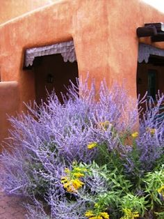 DEER RESISTANT    Taos : Russian sage and Esparanza  (Yellow Bells)  Russian sage, the purple plant in this picture, is truly a plant to love.  Tolerates drought, has silvery gray foilage, deer don't like it, Requires no water during long periods of drought conditions once established.