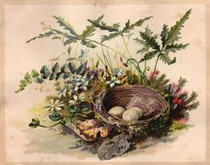 Free Vintage Clip Art - Darling Nest with Eggs - The Graphics Fairy