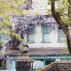 Where to Find Wisteria in London: My Top Locations in Chelsea