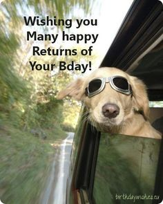61 Ideas funny happy birthday quotes for him guys doggies for 2019 Happy Birthday Quotes For Him, Birthday Wishes For Boyfriend, Happy Birthday Friend, Funny Birthday, Birthday Messages, Birthday Greetings, Funny Dog Fails, Funny Mom Memes, Funny People Quotes