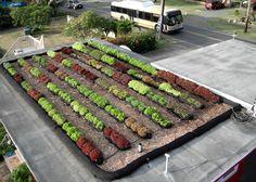 美國屋頂農場公司  Rooftop Farming — FarmRoof
