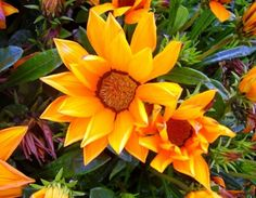 These are definitely a WOW. Flower image | Flowers Plants Trees Gardening photos
