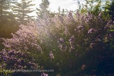 kocimiętka - moja ukochana - Ogrodowa Pasja Plants, Compost, Plant, Planets