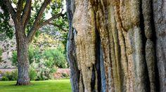 Tree Bark or Not