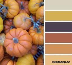 Gradazioni di arancio, grigio ghiaccio, ocra e melanzana scuro.