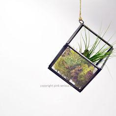 Geometric Air Plant Terrarium// Cube// Hanging by PinkSerissa